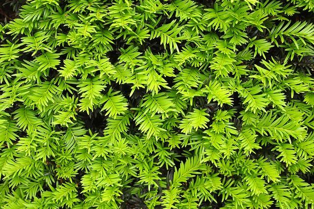De voordelen van haagplanten